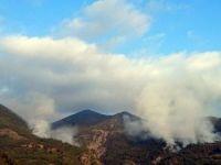 Teröristler 30 hektarlık ormana zarar verdi