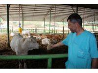 Yenişehir'de hayvancılık gelişiyor