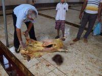 Suruç'ta ölü koyun kesildiği iddiası