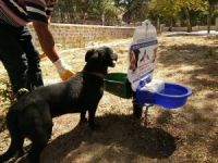 Akşehir Belediyesinden sokak hayvanları için su ve mama kapları