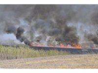 Mogan Gölü'nde sazlık alanlar yandı