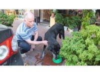 Burhaniyeli esnaflar sokak hayvanlarına sahip çıktı