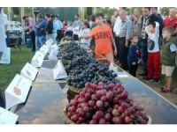 3. Trakya Bağ Bozumu Festivali'nde üzüm güzeli seçildi