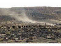 Yem fiyatları Karacadağ'da hayvancılığı vurdu