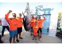 Uluslararası Balıkçılık Turnuvası'nda 295 kiloluk dev balık