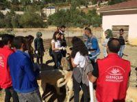 Gönüllüler, sokak hayvanlarını besledi