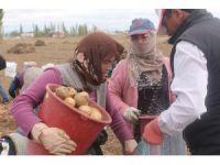 'Kadın Elinde Yerli Patates' projesinde hasat yapıldı
