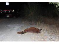Gece yarısı evden kaçan at otomobile girdi 2 yaralı