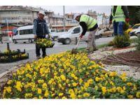 Sivas'ta soğuğa dayanıklı çiçek dikildi