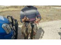 Kaçak avlanan her keklik için 638'şer lira ceza