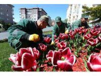 Bağcılar'da park ve bahçeler kışa dayanıklı çim ve çiçeklerle donatılıyor