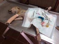 Ayağı kırılan köpek tedavi edildi