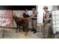 Tokat'ta hayvan hırsızlığından 5 kişi tutuklandı