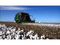 """Doğru: """"1 milyon ton pamuk üretimi hayal değil"""""""