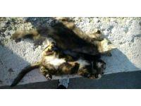 Mersin sahilinde kedi katliamı