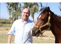 İngiliz yarış atları lüks otomobil fiyatına satılacak