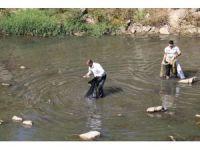 Dicle'de toplu balık ölümleri