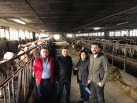 Kula'da süt üreticileri destekleniyor