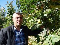 Hisarcık'ta 'cennet hurması' yetiştirildi
