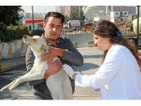 Ataşehir'de hayvanlar tek tek aşılanıyor