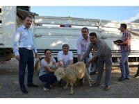 Köyceğiz'de genç çiftçilere hibe desteği