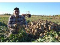 Bitlis'te Şekerpancarı hasadına başladı