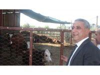 Osmaniye'de 159 genç çiftçi hibe desteğinden yararlandı