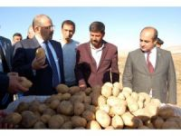 Vali Ustaoğlu, patates hasadına katıldı