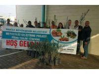 Büyükşehirden üreticiye 122 bin 500 adet zeytin fidanı desteği
