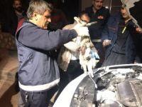 Motor kısmına sıkışan kedi uyutularak kurtarıldı