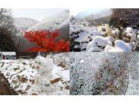 Güney Kore Kış Olimpiyatları'na hazır
