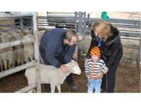 Vize ilçesinde 5 genç çiftçiye 185 koyun dağıtıldı