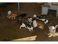 9 bin 915 sokak hayvanın bakım ve tedavileri yapıldı