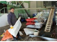 Antalya'da zeytincilik gelişiyor