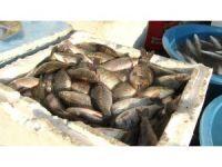 Dicle'de 'istilacı' İsrail sazanları balıkların neslini tüketiyor