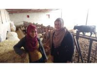 Eltiler hayvan çiftliği kurdu, kadınlara örnek oldu
