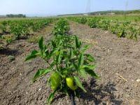 """Üniversiteden halka """"organik tarım"""" eğitimi"""