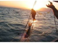 Eğirdir Gölü'nden avlanan balıklar temiz çıktı