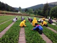 Amasya'da 3 milyon fidan üretildi