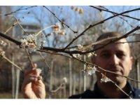 Aralık ayında sıcaklık rekoru kırıldı, ağaçlar çiçek açtı