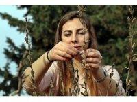 Türk uzmanların susam mutantları, Afrika'da binlerce insana istihdam oluşturdu
