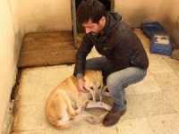 Kalçasında tümör olan köpek hayata tutundu