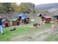 Kartepe'de sokak hayvanları barınakları yenilendi