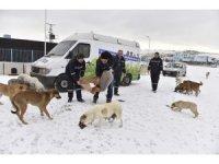 Sokak hayvanları Büyükşehir korumasında