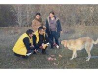 Enkazdan ayrılmayan çoban köpeklerine yemek verildi