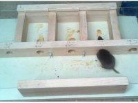 İmkânı olan değil cesareti olan fare kazandı