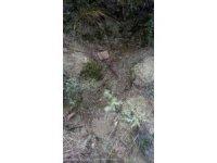 Ormanlık alanda mezar kazdığı iddia edilen 1 kişi yakalandı