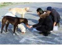 Sokak hayvanları için örnek proje