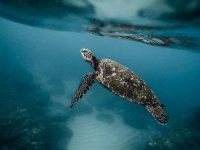 Madagaskar'da kaplumbağa etinden zehirlenen 8 çocuk öldü