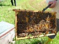 Türkiye'nin arı üreticileri İstanbul'da buluşuyor